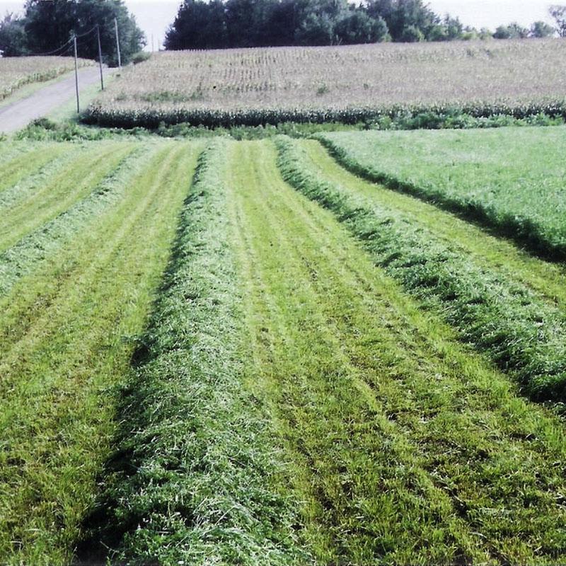 Profit orchardgrass best forage - Profitable crops small plots ...