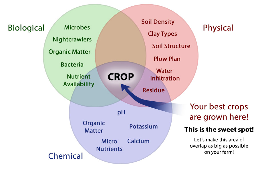 Beneficial microbes from Environoc 401 can improve the biology of your soil. Cover crops help feed the soil microbes and attract beneficial earthworms. Beneficial microbes can break down old fertilizers and residue, improving the fertility of your soil. Cover crops can sequester nutrients, make other nutrients more available, and help in reducing fertilizer expenses. Cover crops can improve organic matter, reduce compaction, and improve other physical properties of the soil.