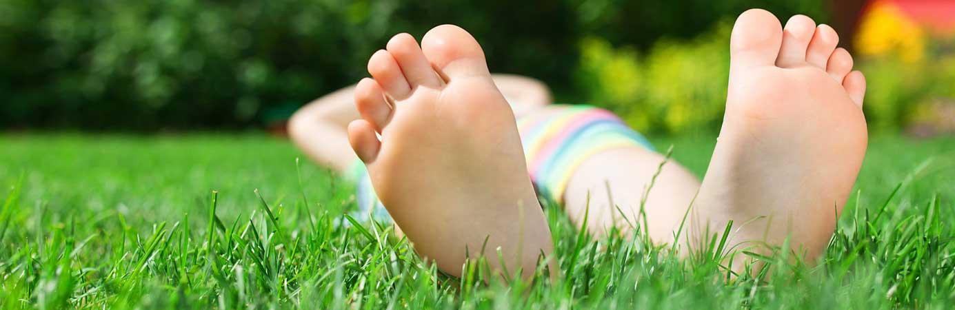 Lawn & Turf Seed