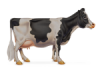 Dairy Preferred Hybrid