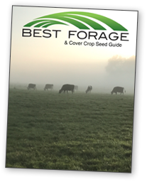 Best Forage 2021 catalog